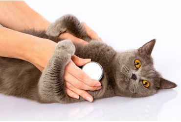 Protect your cats against heartworms